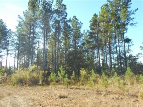 260 Acres In Carroll/ Montgomery Co : Carrollton : Carroll County : Mississippi