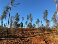 61.3 +/- Wooded Acres, Polk County : Cedartown : Polk County : Georgia
