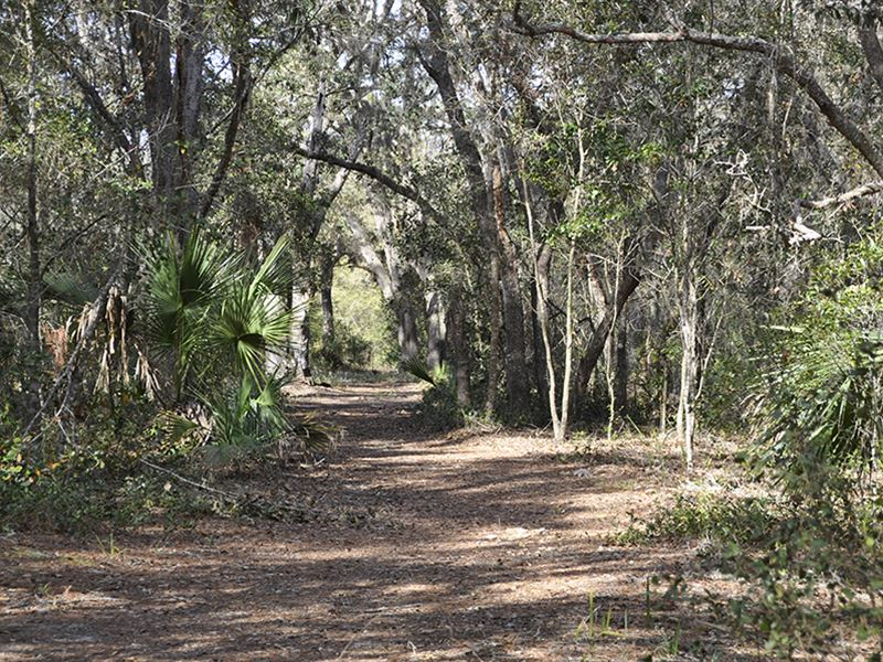 Bear Hammock Game Haven : Eustis : Lake County : Florida