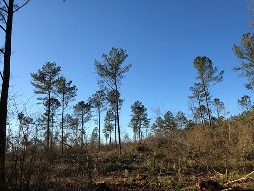 Eastern 15.325 +/- Wooded Ac, Polk : Cedartown : Polk County : Georgia