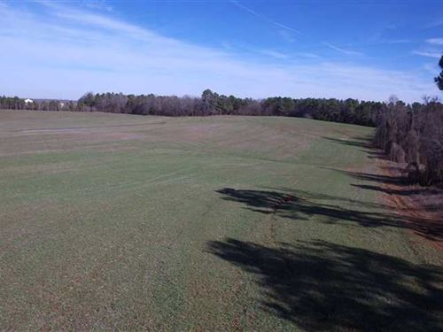 Great Recreational Tract : Beech Bluff : Chester County : Tennessee