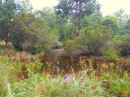 Topy Creek Tract, Bienville Parish : Ashland : Bienville Parish : Louisiana