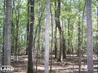 River Hunting And Timber Investment : McCool : Attala County : Mississippi