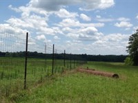 80 Ac Hunting Land W/ Cabin Pike : Brundidge : Pike County : Alabama