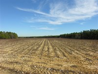 112.72 Acres Cultivated And Wooded : Waynesboro : Burke County : Georgia