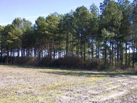 101 acre Watson Rd Tract : Hawkinsville : Pulaski County : Georgia
