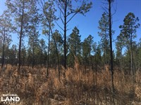 Beautiful Level Land With Creek : Inman : Spartanburg County : South Carolina