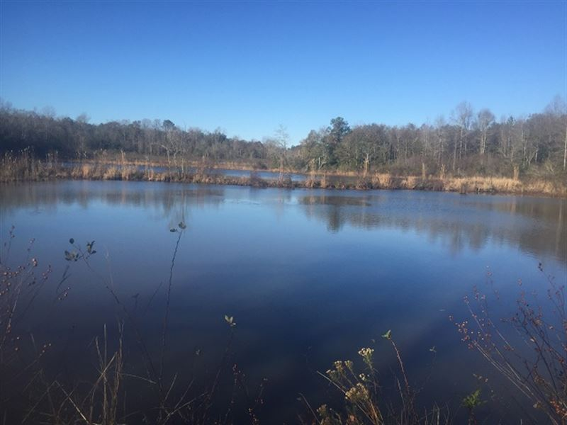 1665 Acres Timberland In Pike Co : Troy : Pike County : Alabama