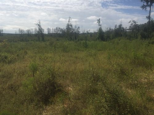 129.8 Ac Timber, Hunting Barbour Co : Clio : Barbour County : Alabama