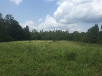 93 Ac Timber / Hunting Crenshaw Co : Petrey : Crenshaw County : Alabama