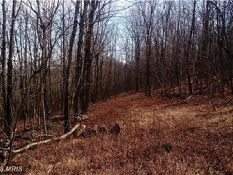 Nice Secluded : Ridgeley : Mineral County : West Virginia