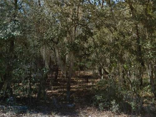 Putnam County, Fl $37,500 Neg : Interlachen : Putnam County : Florida