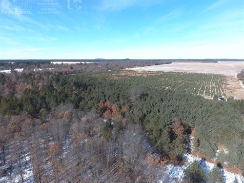 28 Acres Of Timberland For Sale : Hancock : Adams County : Wisconsin