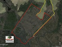 167 Acres of Hunting Land For Sale : Enfield : Halifax County : North Carolina