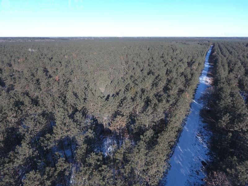 Timber Land For Sale : Nekoosa : Adams County : Wisconsin