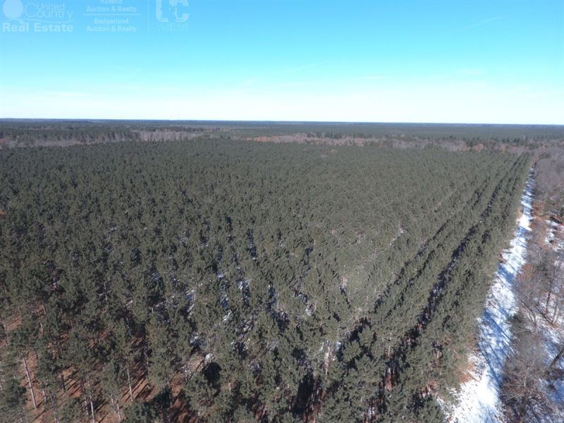 Affordable 36+ Acre Timber Land : Nekoosa : Adams County : Wisconsin