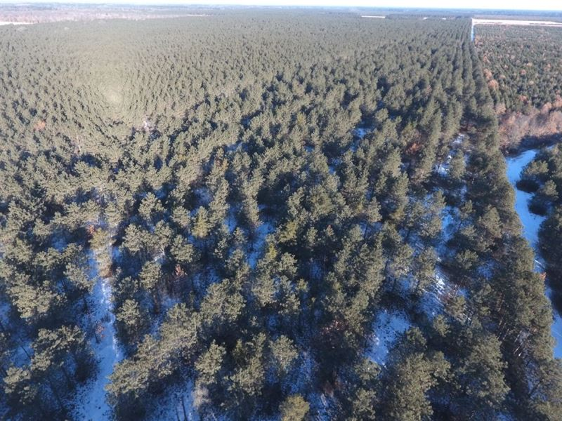 Wisconsin Timber Land Parcel : Nekoosa : Adams County : Wisconsin