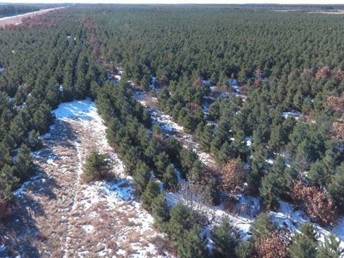 35 Acre Tract Of Timber Land : Nekoosa : Adams County : Wisconsin