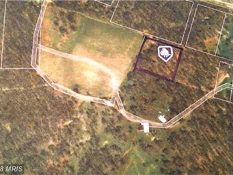 Rt 135 Level Wooded Lot : Swanton : Garrett County : Maryland