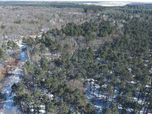 71 Acre Hunting Property : Nekoosa : Adams County : Wisconsin
