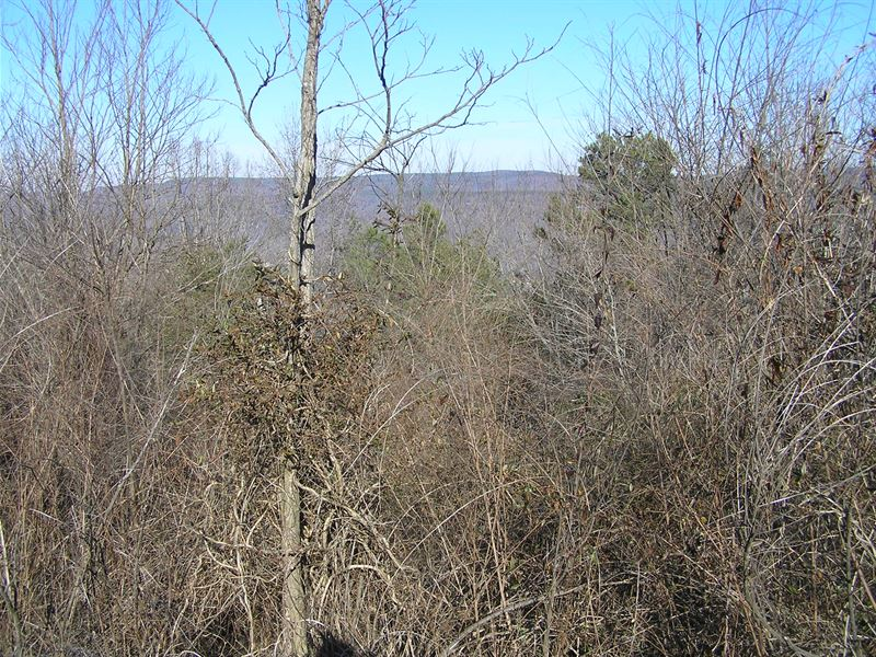 Bluff Lot With Views : South Pittsburg : Marion County : Tennessee