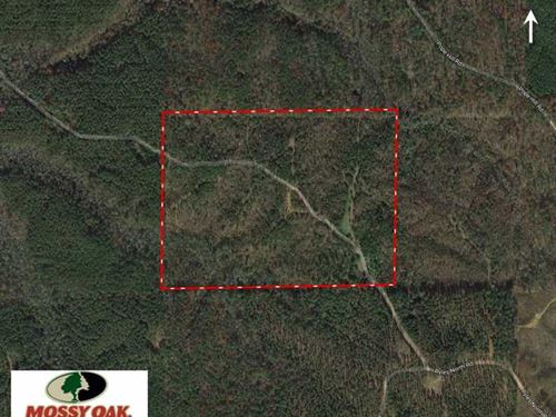 53 Acre Winston County, MS Hun : Louisville : Winston County : Mississippi