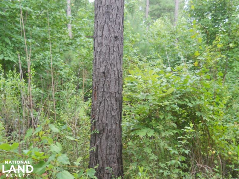 10Ac in Tallahatchie County : Cascilla : Tallahatchie County : Mississippi