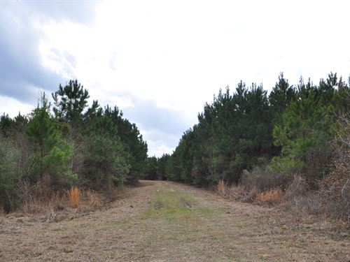 1228 Ac Guinea Road : Oakhurst : San Jacinto County : Texas