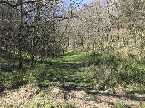 52 Wooded Acres In Monroe Countyky : Tompkinsville : Monroe County : Kentucky