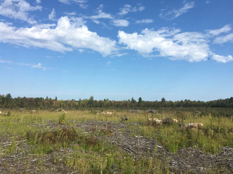 Hunting Land Near Deer River : North Lawrence : New York County : New York