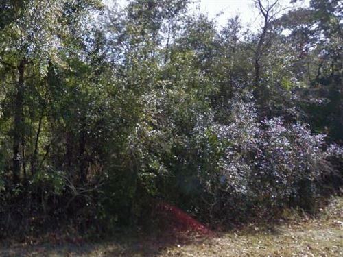 Marion County, Fl $34,999 Neg : Silver Springs : Marion County : Florida