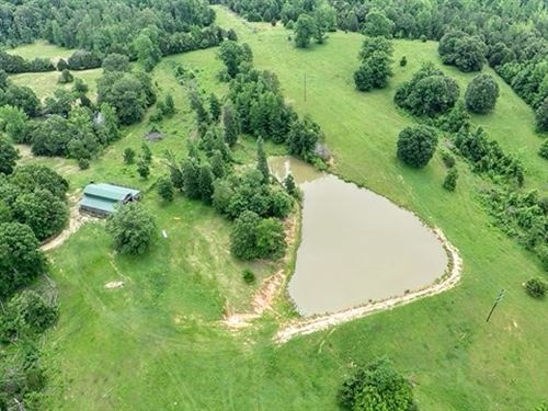Massive Acreage With Building Sites : Bruceton : Carroll County : Tennessee