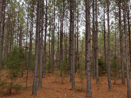 Shirley Road Tract : Hodges : Greenwood County : South Carolina