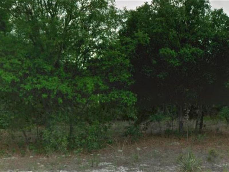 Citrus County, Fl $22,000 Neg : Citrus Springs : Citrus County : Florida
