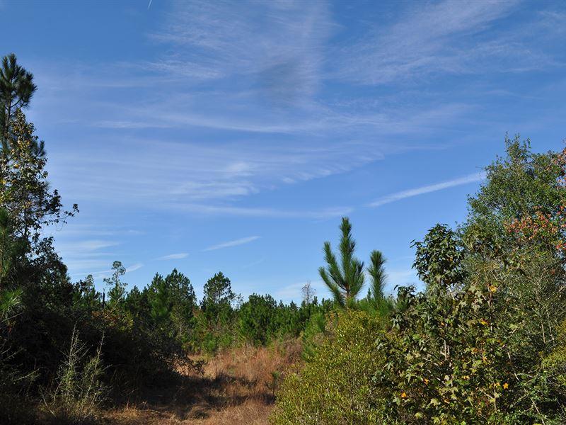 360 Acres Cr 725 Buna : Buna : Jasper County : Texas