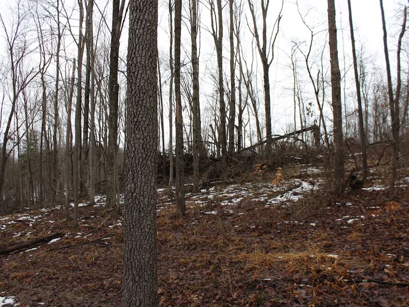 Mann Rd - 76 Acres : Logan : Hocking County : Ohio