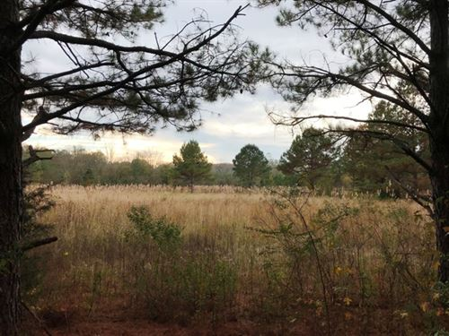 40 Acres For Sale In Clay County : Pheba : Clay County : Mississippi