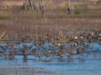 Prospect Island : Jacksonboro : Colleton County : South Carolina