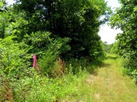 Building Site, No Zoning, Electric : Hardy : Fulton County : Arkansas
