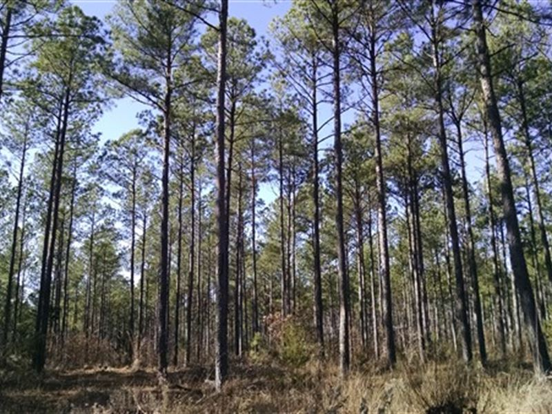 65 Acres - Fairfield County, Sc : Blackstock : Fairfield County : South Carolina