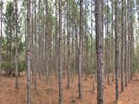 Carter Tract : Evergreen : Conecuh County : Alabama