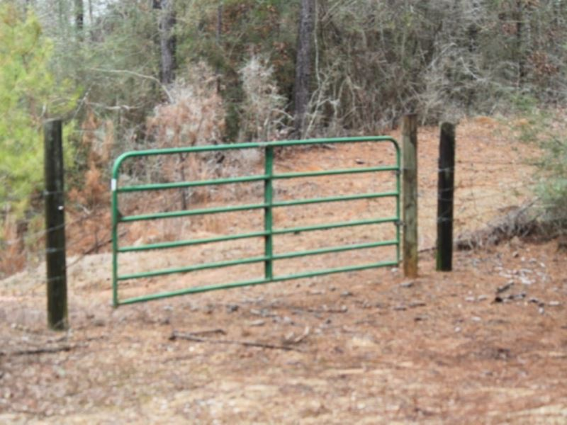 20 Acres In Walthall County, Ms : Tylertown : Walthall County : Mississippi