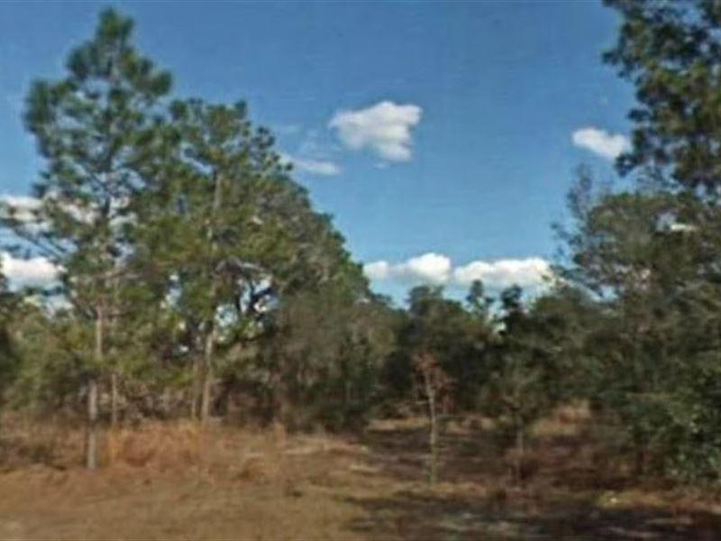 Citrus County, Fl $36,000 Neg : Citrus Springs : Citrus County : Florida