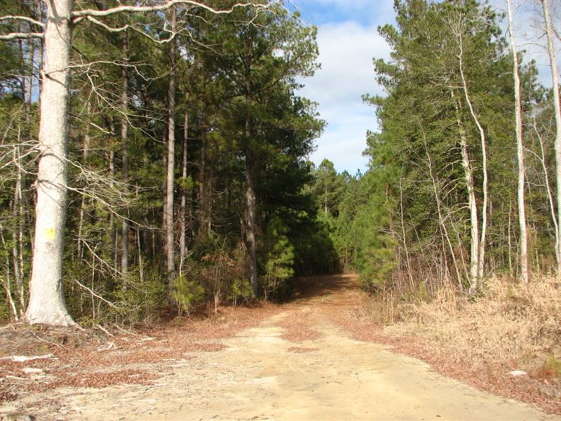 Edmunds Lane Tract 9867 : Waverly : Sussex County : Virginia