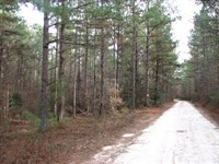Bendall/Greenfield Farm Road Tract : Petersburg : Sussex County : Virginia