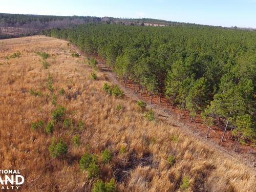 National Forest Longleaf Investment : Patrick : Chesterfield County : South Carolina