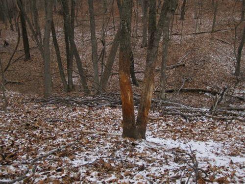 67 Ac M/L Hunting & Pasture : Prairie Home : Cooper County : Missouri