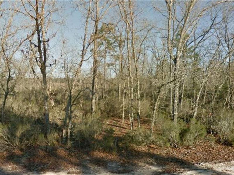 Putnam County, Fl $5,000 Neg : Interlachen : Putnam County : Florida