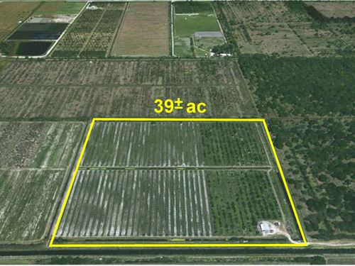 39Ac Secluded Agricultural Land : Fort Pierce : Saint Lucie County : Florida