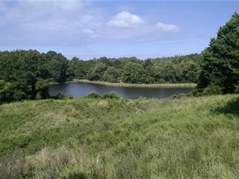 10 Acre Shared Pond And Timber : White Oak : Fairfield County : South Carolina